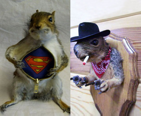 Home Decor Beyond Imagination With Taxidermy