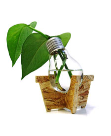 Light Bulb Plant2