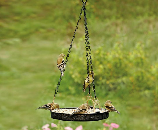 a feeder is a versatile feeder it comes with multiple feeding trays these can be suspended and mounted as well they are easily accessible
