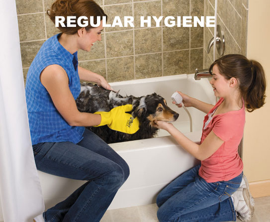 Regular hygiene 5