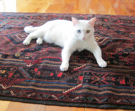 old rugs used for animal shelter 8